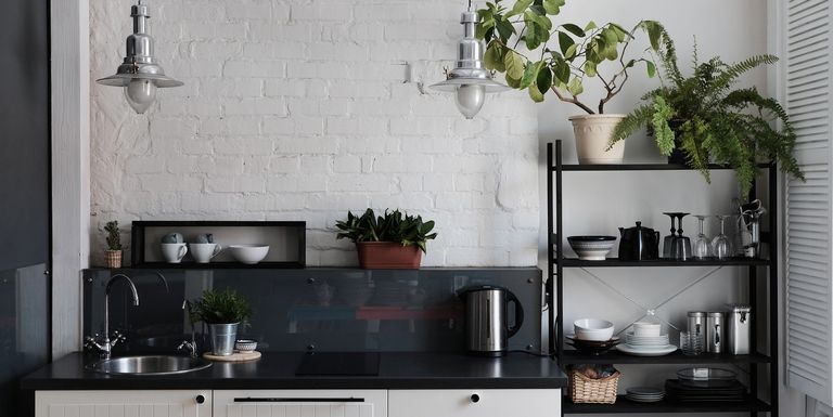 พืชที่ดีที่สุดสำหรับทุกห้องในบ้านของคุณ